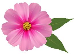 pink flower pink flower png image clipart gallery yopriceville high