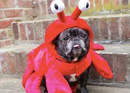 Lobster Costume The 38 Best Halloween Costumes For Dogs In 2017 Purewow