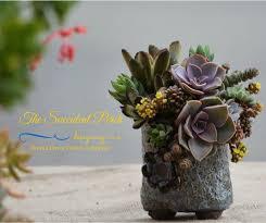 succulent arrangements 558 best succulent container arrangements images on