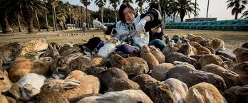 cat island bunny island fox village cat island a look into japan s
