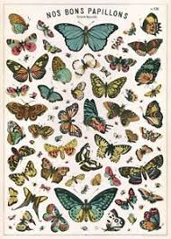 cavallini poster butterflies nos bons papillons poster cavallini co 20 x 28 wrap