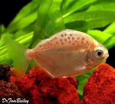 102 best aquarium fish images on tropical fish fish