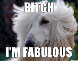 I Am Fabulous Meme - i m fabulous meme on imgur