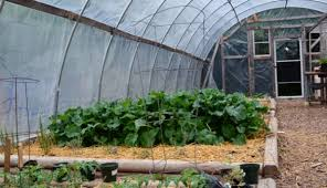 Backyard Greenhouse Winter 7 Market Crops You Can Grow In A Greenhouse Hobby Farms