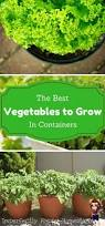 25 beautiful growing vegetables in pots ideas on pinterest