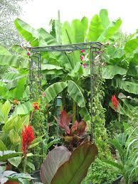 42 best tropical inspiration images on pinterest tropical plants