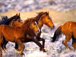 sous cheval bureau fond d écran de cheval chevaux en pleine course