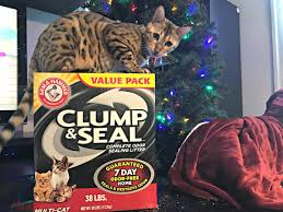 petsmart thanksgiving hours how to have a stress free holiday for cats clumpandseal i am