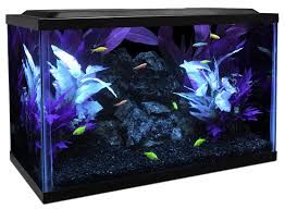 How To Clean Fish Tank Decorations Glofish Care