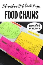 best 25 food chain diagram ideas on pinterest food chains food