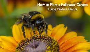 plants for native bees green life blog u2013 kimberly carr home designs