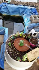 how to build a small scale backyard aquaponics system for less