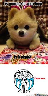 Cute Puppy Meme - cute puppy by sunnybunny meme center
