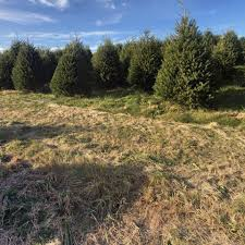 10 places to cut your own christmas tree in lancaster county