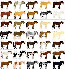 horse colors bing images horse demonstration pinterest