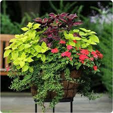 Summer Flower Garden Ideas - 556 best containers summer ideas from the barn nursery