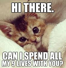 Happy Kitten Meme - am i cute 26th february 2016 february 2016 cat and animal