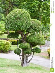 albero giardino alberi da giardino resistente al freddo in 3 variet罌 for 81