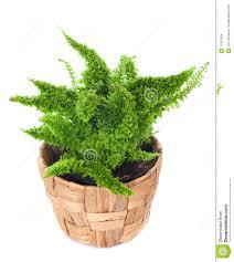 window plant stock images image 17567434