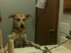 Mirror Meme - dog looking in mirror meme weknowmemes
