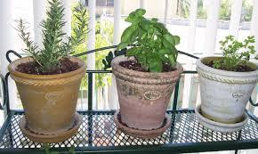 plant trough planters gripping trough planters b u0026q u201a contemporary