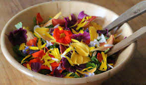 cuisiner les herbes sauvages cueillette et cuisine de plantes sauvages en bretagne pass on