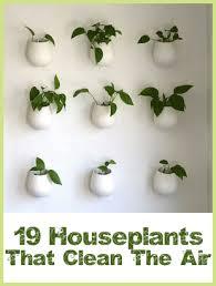 House Plants Diseases - 19 houseplants that clean the air garden pinterest