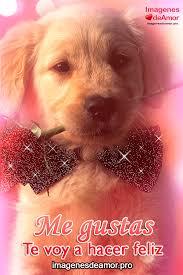 imagenes con frases de amor super tiernas 15 imágenes de perritos con frases de amor súper tiernas frases de
