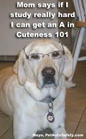 Dog With Glasses Meme - glasses american dog blog