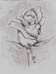 rose photo pencil art rose flowers pencil drawings drawing and
