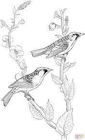 chestnut sided warbler coloring page free printable coloring pages