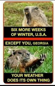 Groundhog Meme - 19 best groundhog day images on pinterest animal memes animal