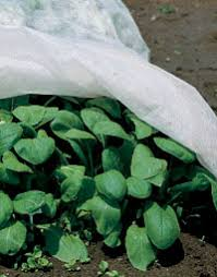 Shade Cloth Protecting Your Plants by Garden Fabric Row Covers Shade Netting Frost Covers