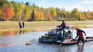 places to visit in thanksgiving top fall activities best ways to see the fall colours in muskoka