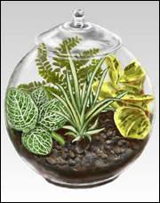 made a bunch very good instructions on how to make a terrarium