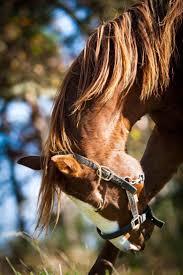 64 best california chrome images on pinterest horse racing