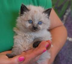 nevada spca animal rescue foster parents needed today for 16