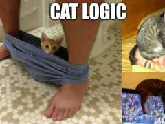 Cat Sitting Meme - cats sitting in funny places weknowmemes