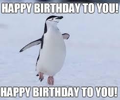 Meme Penguin - penguin birthday memes wishesgreeting