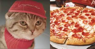a pizza hut restaurant run by cats is open for business in japan