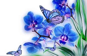 Butterfly Flower Butterfly On Flower Images And Photos Free Download