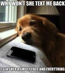 Best Dog Memes - 10 of the best dog memes on the web dog lovers corner