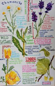 native plants journal palma rea u0027s journal entry of herbs and plants art journal