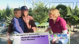 heidrichs colorado tree farm nursery momseveryday