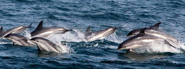 campaigns dolphin safe fishing international marine mammal project