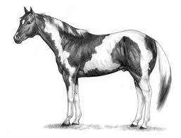 horse coloring pages coloring pages and cars
