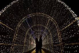 illuminated night trail opens at kew gardens in west london