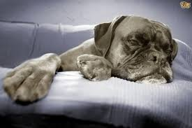 bored how can you tell if a dog is bored pets4homes