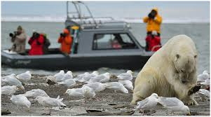 Alaska wildlife tours images Wild alaska travel alaska polar bear northern lights tour wild jpg