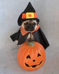 the world u0027s newest photos of costume and pugs flickr hive mind